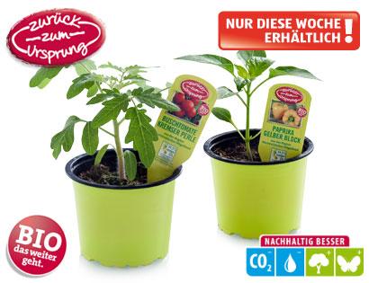Bio-Gemüsejungpflanze, M�rz 2014